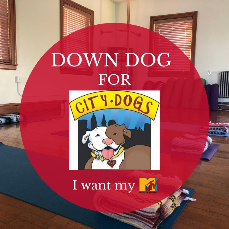 This Sunday – Down Dog for City Dogs!