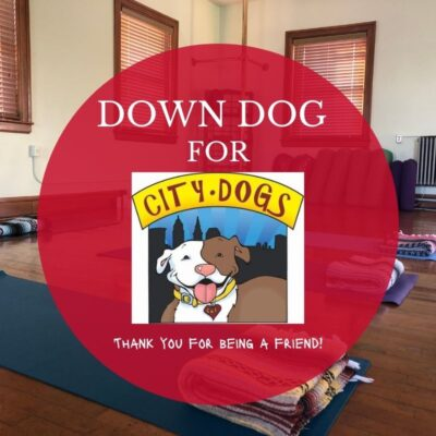 Down Dog for City Dogs in November – Thank You for Being a Friend!