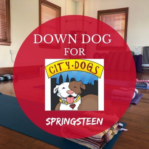 Down Dog for City Dogs in January