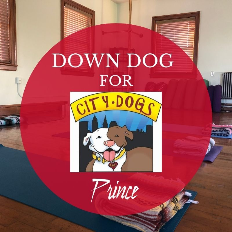 Down Dog for City Dogs in February