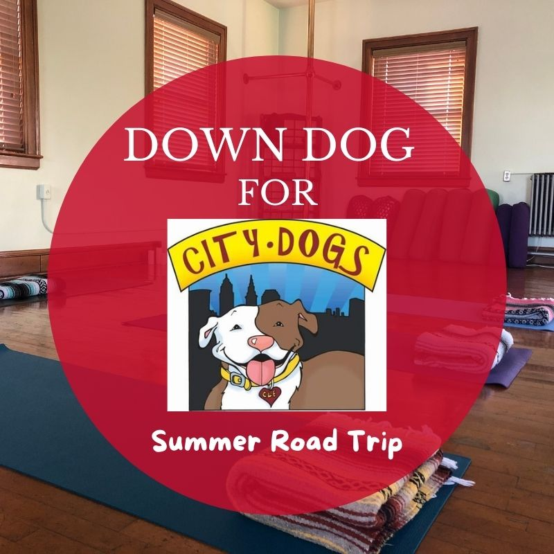 Down Dog for City Dogs in July